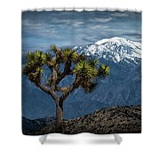 Joshua Tree At Keys View In Joshua Park National Park Shower Curtain