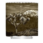 Joshua Tree At Keys View In Sepia Tone Shower Curtain