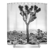 Joshua Tree Before Storm Shower Curtain