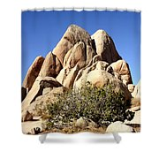 Joshua Tree Center Shower Curtain