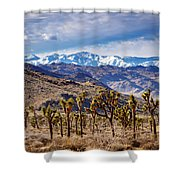 Joshua Tree National Park 2 Shower Curtain