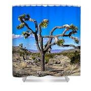 Joshua Tree National Park Winter's Day Shower Curtain