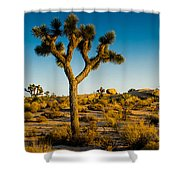Joshua Tree Panoramic Shower Curtain