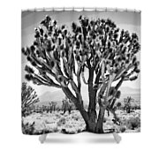 Joshua Trees Bw Shower Curtain