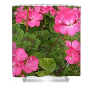 Joyful Geranium  Shower Curtain
