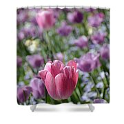 Joyful Tulip Shower Curtain