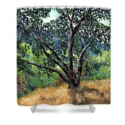 Juan Bautista De Anza Trail Oak Shower Curtain