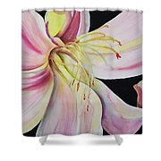 Jubilant Lily Shower Curtain