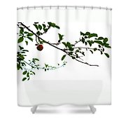 Juicy   A Tempting Photograph Of A Tasty Ripe Red Apple On A Tree  Shower Curtain