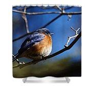 Juicy Male Eastern Bluebird Shower Curtain