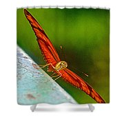Julia Heliconian Butterfly Spreading Its Wings In Iguazu Falls National Park-brazil  Shower Curtain