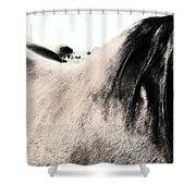 Jump On Shower Curtain