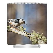 Jump - White-breasted Nuthatch Shower Curtain