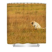 Jumping Coyote Shower Curtain