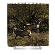 Jumping Deer Shower Curtain