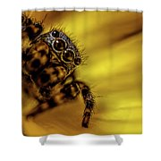Jumping Spider Shower Curtain