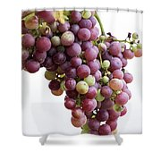 June Grapes #1 Shower Curtain