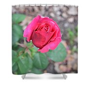 June Rose #5 Shower Curtain