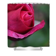 June Rose #7 Shower Curtain