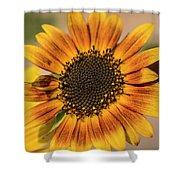 June Sunflowers #2 Shower Curtain