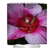 Junes Hibiscus 1 Shower Curtain