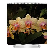 Jungle Orchids Shower Curtain