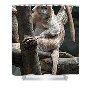 Jungle World Monkey2 Shower Curtain