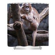 Jungle World Monkey3 Shower Curtain