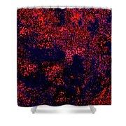 Juniper Berries 1 3 Shower Curtain