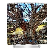 Juniper Monarch Shower Curtain