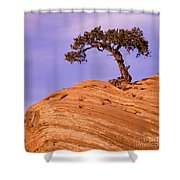 Juniper On Sandstone Shower Curtain