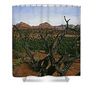 Juniper Tree Shower Curtain