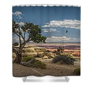 Juniper Tree On A Mesa Shower Curtain