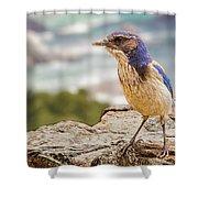 Just A Bird Shower Curtain