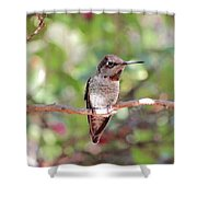 Brief Rest Shower Curtain