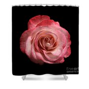 Just A Rose Shower Curtain