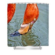 Just A Sip Shower Curtain