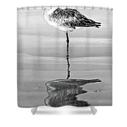 Just Being Coy - Bw Shower Curtain