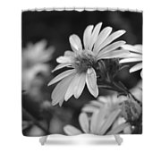 Just Black And White Shower Curtain