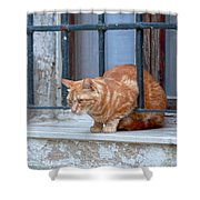 Just Curious Cat Shower Curtain