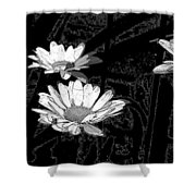 Just Daisies  Shower Curtain