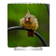 Just Doing A Little Feather Fluffing Shower Curtain