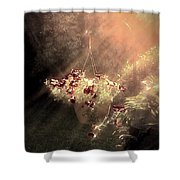 Just Dreaming Shower Curtain
