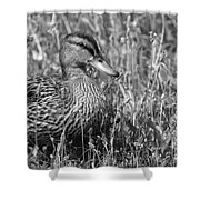 Just Ducky Bw Shower Curtain