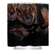 Just Hanging Around - Bats Shower Curtain
