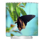 Just Hanging Out - Red-spotted Purple Butterfly Shower Curtain