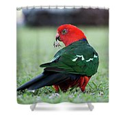 Just Having A Feed 0541 Shower Curtain
