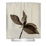 Just Leaves Shower Curtain