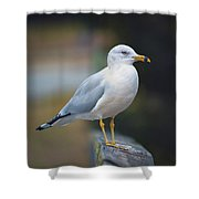 Looking Forward Shower Curtain by Cindy Lark Hartman