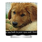 Just One Look Shower Curtain